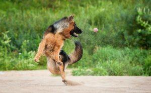 saut berger allemand