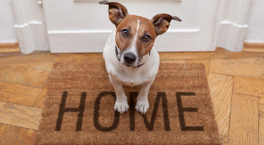 Accueillir un chiot à la maison