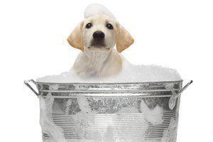 baignoire chien