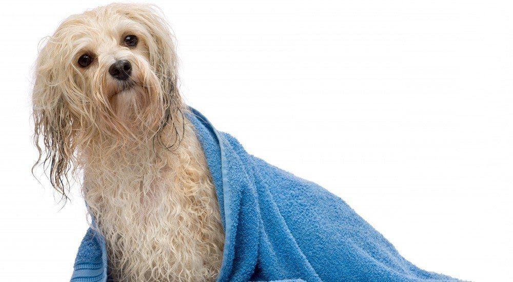 bases du toilettage canin outils et techniques chien de race
