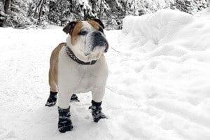 Chien chaussons pour la neige