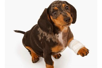 Chiot prévenir blessures