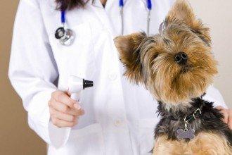 Chiot visite vétérinaire