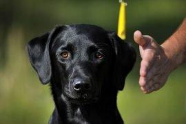 Technique d'éducation canine