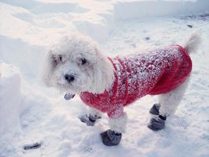 Chien manteau hiver